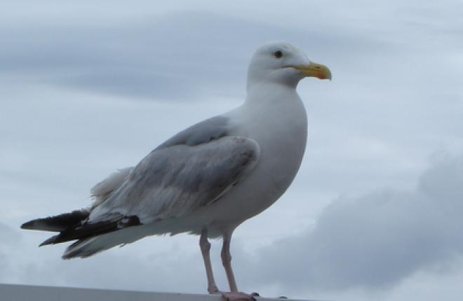 Человек-птица отправился в полет :: ATO.ru