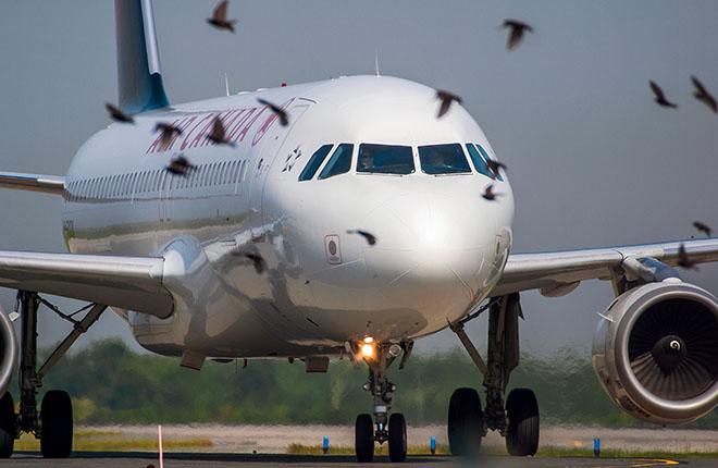 Попадание птицы в современный авиа- двигатель может обойтись страховщикам в несколько миллионов долларов :: Леонид Фаерберг / Transport-Photo.com