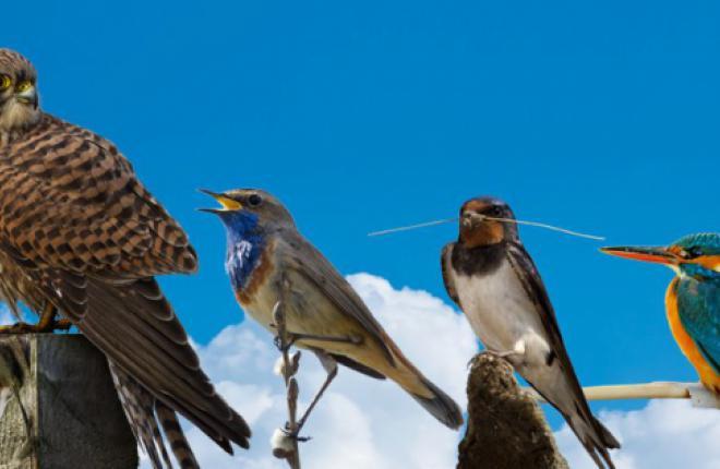 Самолеты авиакомпании Estonian Air будут носить имена эстонских птиц