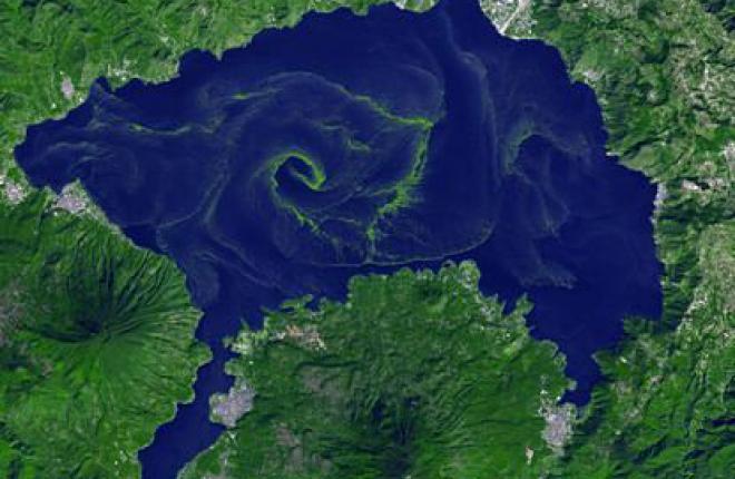Algae пригодятся в качестве сырья для биотоплива в авиации